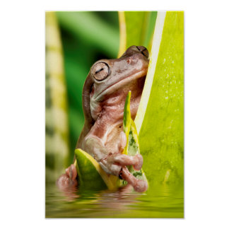 Beautiful small frog on a plant in water poster