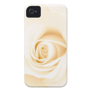 Beautiful soft cream colored rose flower floral Case-Mate iPhone 4 case