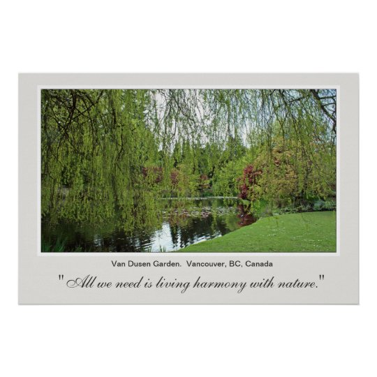Beautiful soft, green spring willow tree and pond. poster