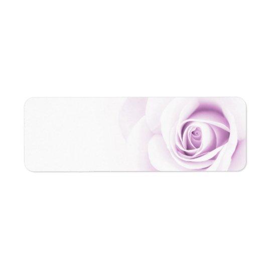 Beautiful soft pale purple rose flower floral