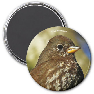 Beautiful Sooty Fox Sparrow in a Pear Tree 7.5 Cm Round Magnet