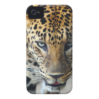 Beautiful spotted leopard iPhone 4 covers
