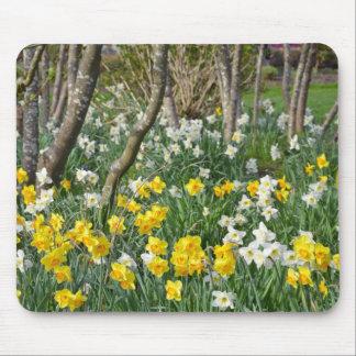 Beautiful spring daffodil garden mouse mat