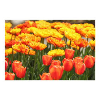 Beautiful Spring Flowers Photo Print