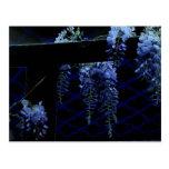 Beautiful Strange Blue Lavender Wisteria Night Post Cards