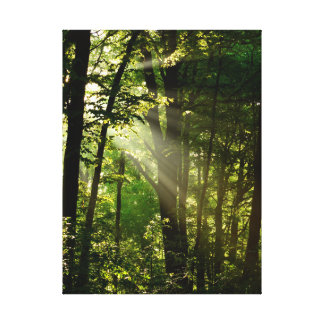 Beautiful Sunbeams in the Morning Summer Forest Canvas Print