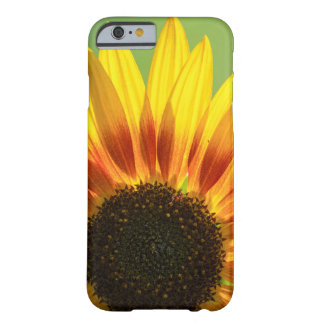 Beautiful sunflower barely there iPhone 6 case