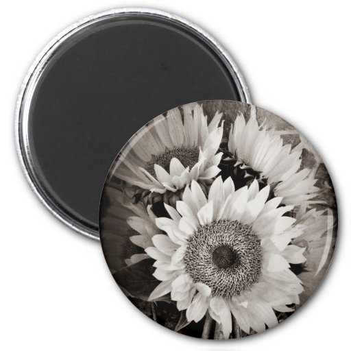 Beautiful Sunflower Bouquet Photo in Black & White Refrigerator Magnets