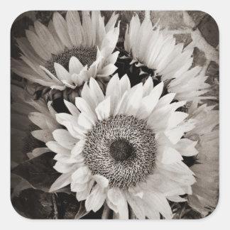 Beautiful Sunflower Bouquet Photo in Black White Sticker