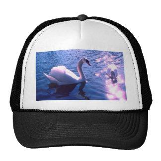Beautiful swan in lake hats