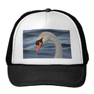 Beautiful Swan in Water Cap