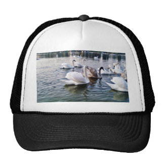 Beautiful Swans In River Hats
