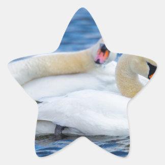 Beautiful Swans on a Lake Enjoying the Day Sticker