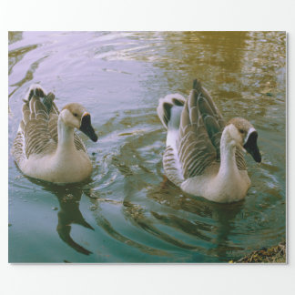 Beautiful swans wrapping paper