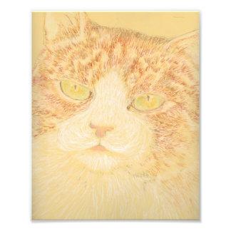 Beautiful Tabby Cat Art Print Photographic Print