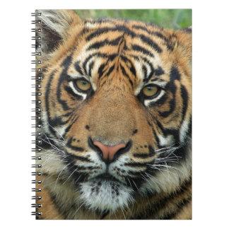 Beautiful Tiger Notebook
