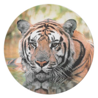 Beautiful Tiger Photographic Plate