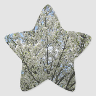 Beautiful tree with full of white flowers star sticker