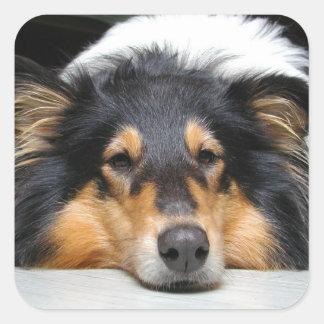 Beautiful tri color Collie dog sticker, gift idea Square Sticker