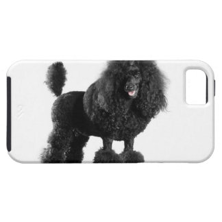 Beautiful, trimmed, black, complete poodle body iPhone 5 case