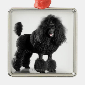 Beautiful, trimmed, black, complete poodle body Silver-Colored square decoration
