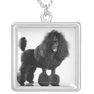Beautiful, trimmed, black, complete poodle body square pendant necklace