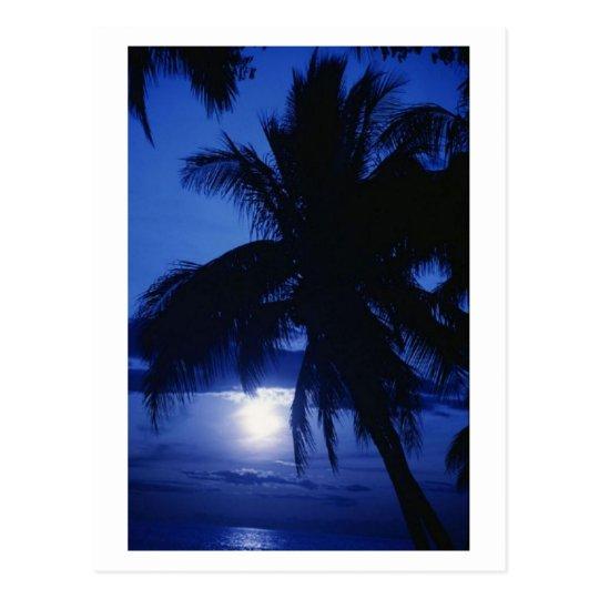 Beautiful Tropic Scenery Postcard