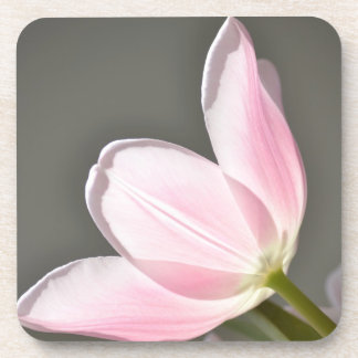 Beautiful Tulip Beverage Coaster