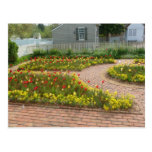 Beautiful tulip garden Colonial Williamsburg Postcard