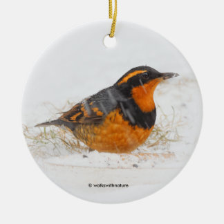 Beautiful Varied Thrush on a Snowy Winter's Day Christmas Ornament