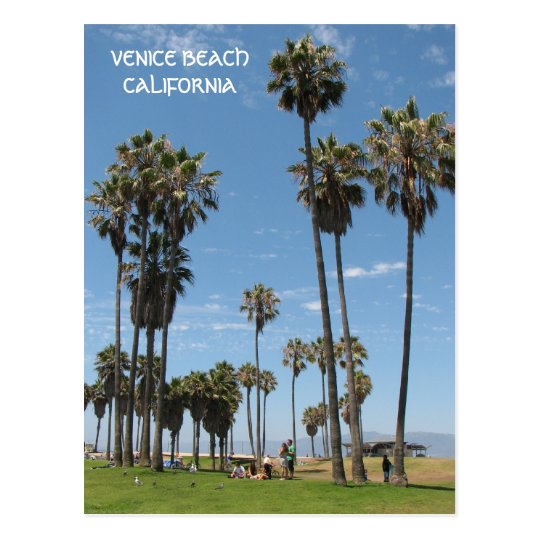 Beautiful Venice Beach Postcard! Postcard
