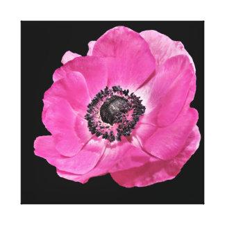 Beautiful Vibrant Bright Pink Poppy Floral Black Canvas Print