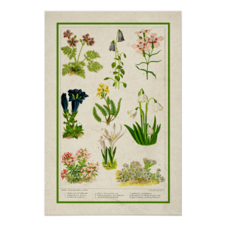Beautiful Vintage Inspired Color Botanical Floral Poster