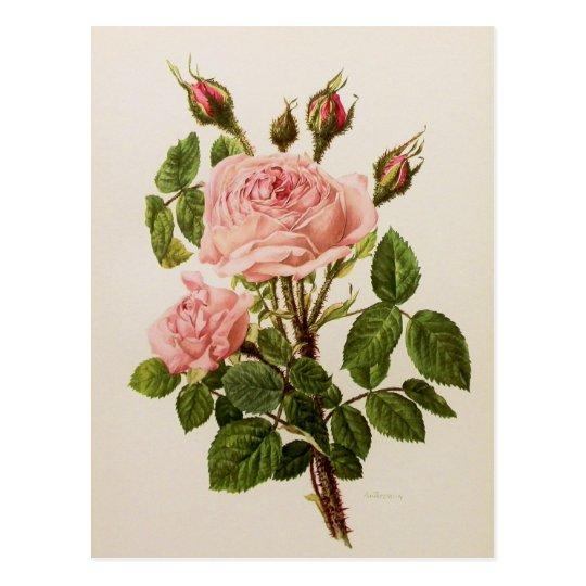 Beautiful Vintage Rose Floral Botanical Fine Art Postcard