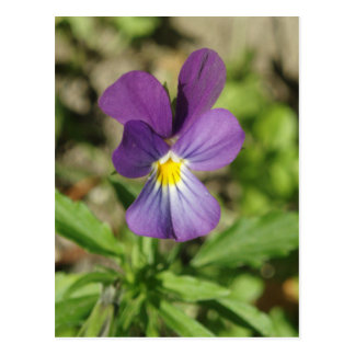 Beautiful violet flower photo postcard