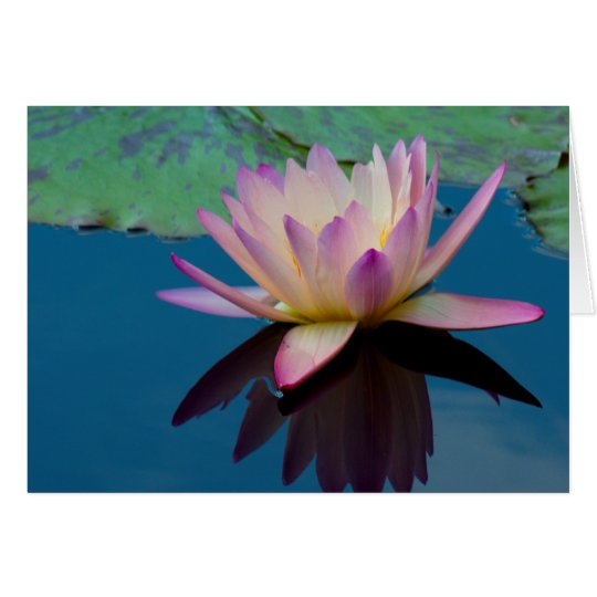 Beautiful Water Lily Floral Photo Card