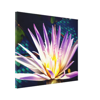 Beautiful Water Lily In The Sunlight Canvas Print