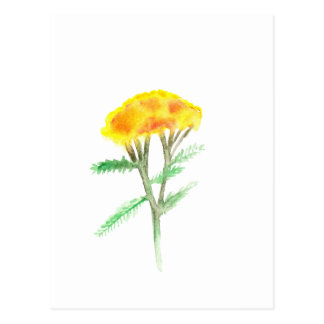 Beautiful watercolor yellow gaillardia postcard