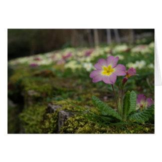 Beautiful Weed : Purple Flower Card