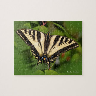 Beautiful Western Tiger Swallowtail Butterfly Puzzle