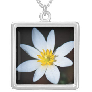 Beautiful White Bloodroot Wildflower Necklace