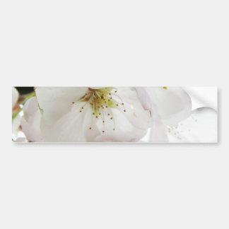 Beautiful White Bumper Stickers