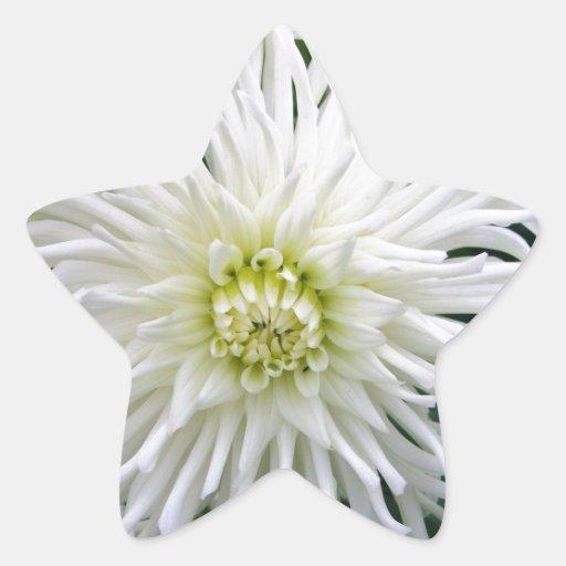 Beautiful White Dahlia - Stickers