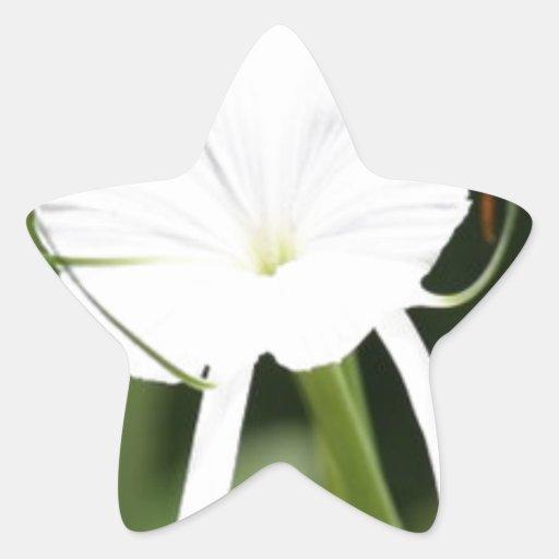 Beautiful White Flower Sticker