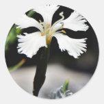 Beautiful White Flower Stickers
