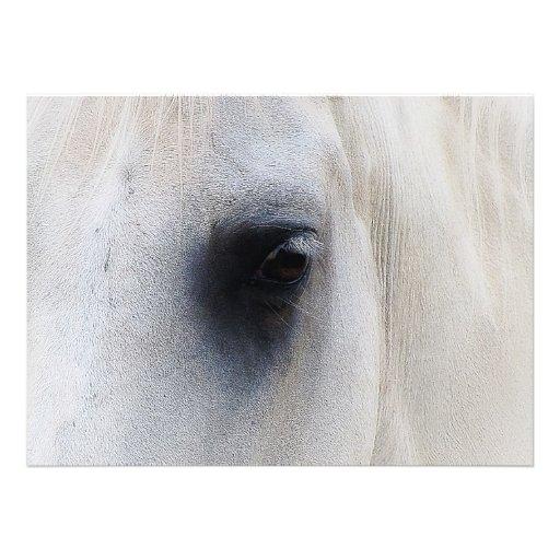 Beautiful White Horse Closeup Custom Invitations