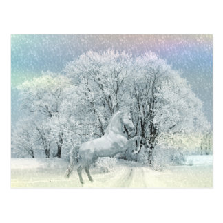 Beautiful White Horse in Snow Postcard