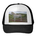 Beautiful white horse photograph hats