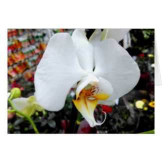 Beautiful White Phalaenopsis Orchid Card