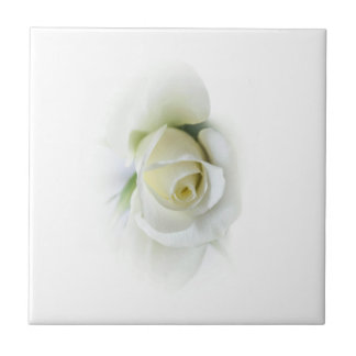 beautiful white rose on a tile